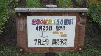 DSC05941.JPG